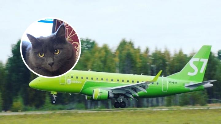В авиакомпании S7 объяснили, почему сбежавшего из самолёта кота Кузю не пустили в салон