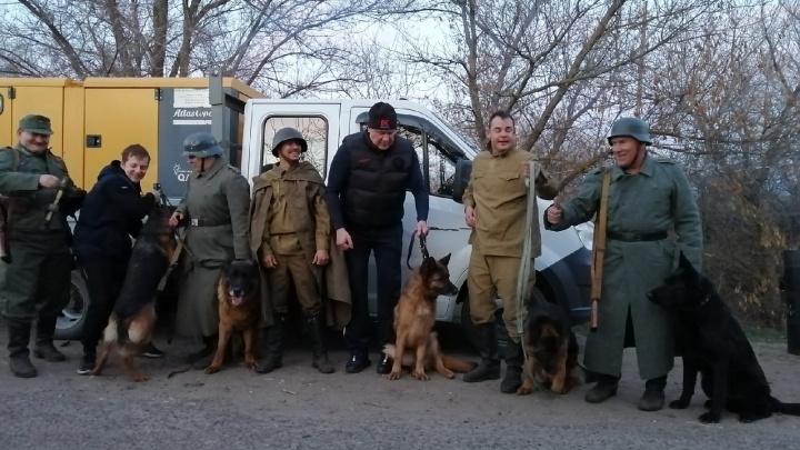 Теперь они — настоящие актеры: волгоградских овчарок позвали на съемки фильма ко Дню Победы