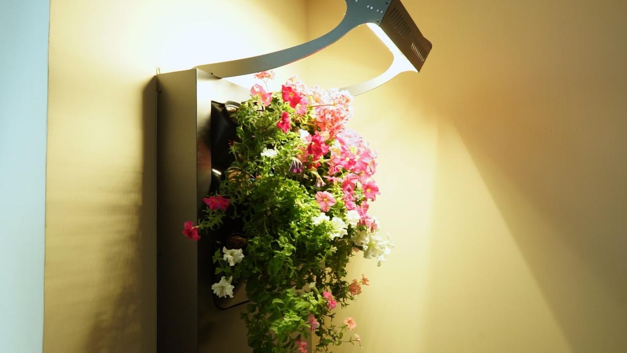 Последнее изобретение компании — фитокартина. Здесь можно выращивать как цветы, так и пряные травы