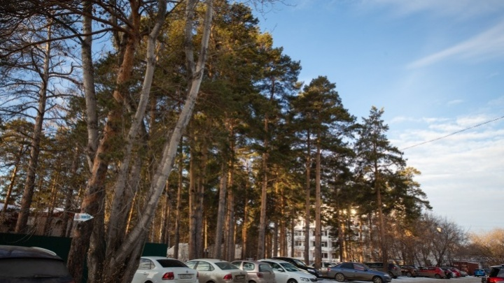 Минэкологии намерено добиваться изменения границ челябинского бора под строительство больницы