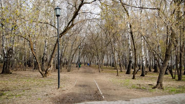 «Невзирая на режимы»: парки и скверы в Новосибирске собираются обработать от клещей