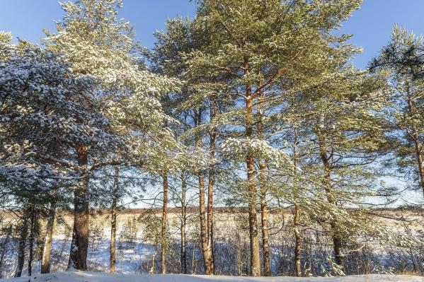 Экопарк находится в одном из самых красивых мест Новосибирской области