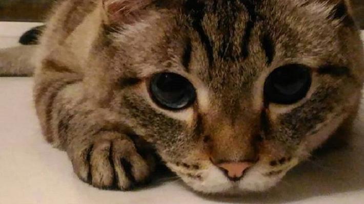 «Он не может вколоть себе инсулин, у него же лапки»: история кота с сахарным диабетом