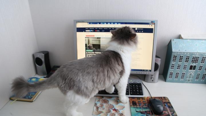 10 невыносимо милых фото, как котики и пёсики мешают новосибирцам работать из дома
