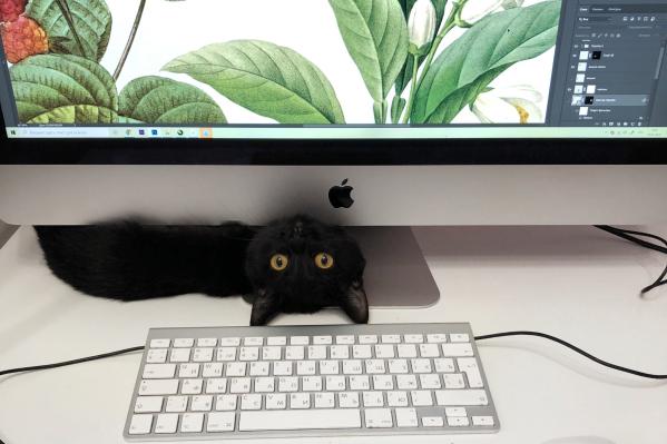 Главная причина, почему дома работа идет медленнее, — это, конечно, животные