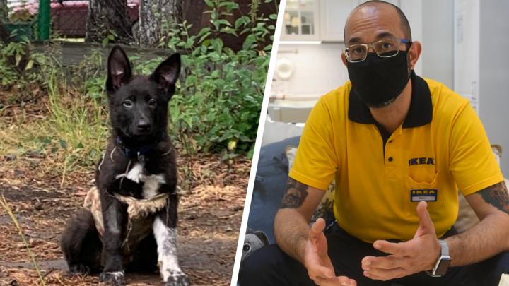 Берите пример: директор IKEA в Екатеринбурге взял щенка из приюта