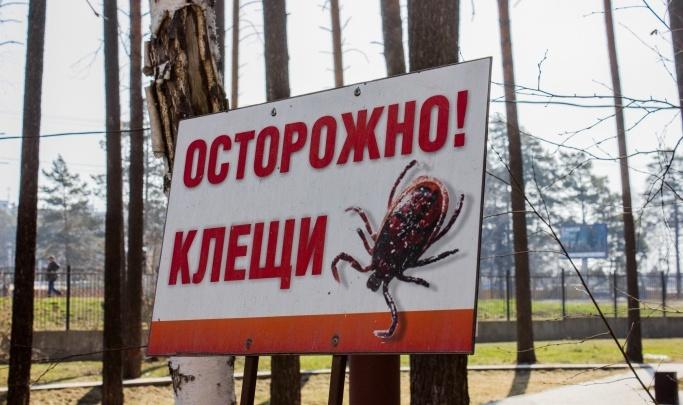 «На 60% выше, чем в прошлом году»: в Новосибирской области пересчитали укусы клещей