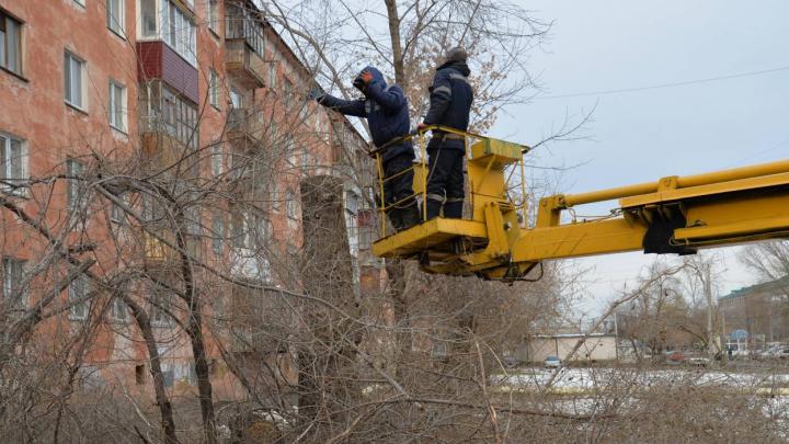 «Сносу подлежат только старые и аварийные»: в Кургане убирают деревья и кустарники