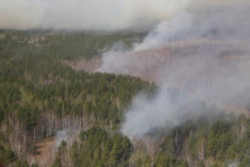 В Зауралье растёт площадь лесных пожаров