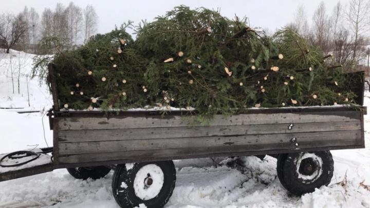 Кузбассовец может получить 4 года тюрьмы за вырубку двух десятков елок
