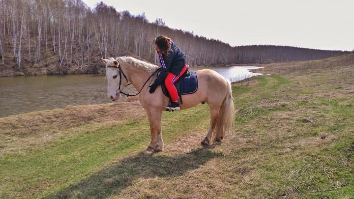 Из-за пандемии коронавируса тюменский конный клуб оказался на улице