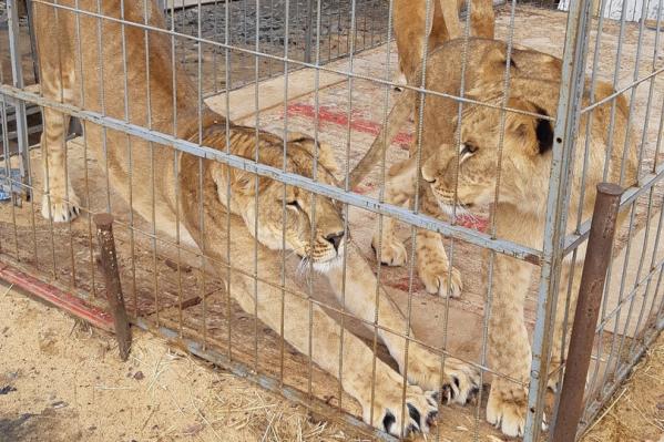 Для цирковых животных в Кургане собрали еду
