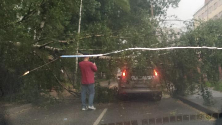На ребёнка упало дерево: на Ярославль обрушилась непогода. Ситуация в городе в режиме онлайн