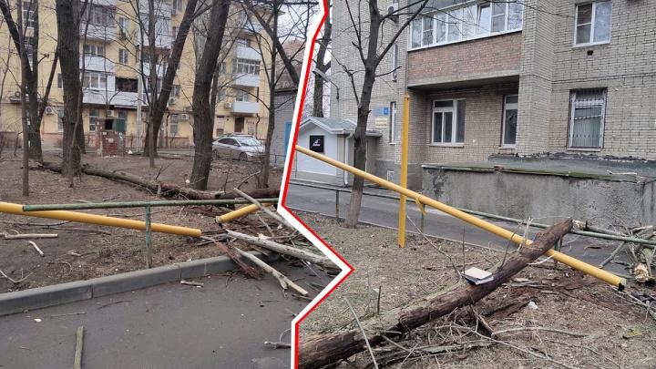 В центре Ростова рухнувшее дерево перерубило газопровод