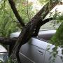 В центре Ростова рухнувшая ветка раздавила четыре автомобиля