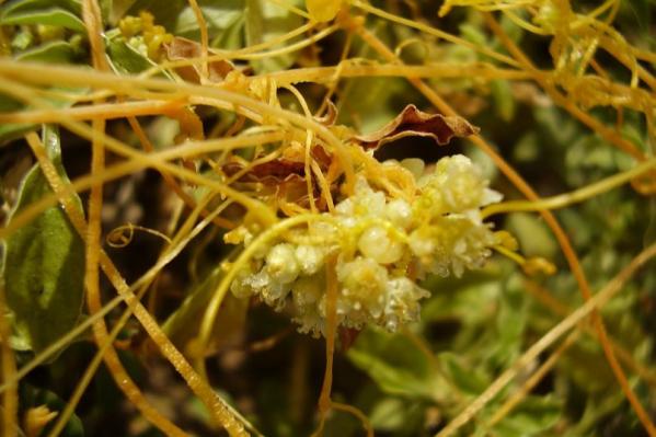 Землю избавили от сорного растения