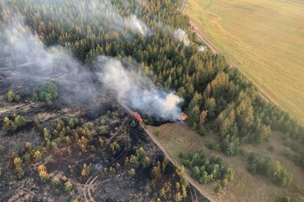 Лес в Цимлянском районе горел трое суток