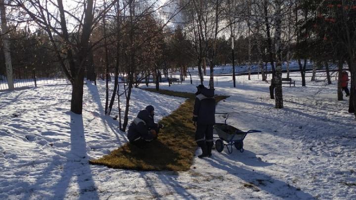 «Перепутали время года». В уфимском парке начали стелить газон на снег