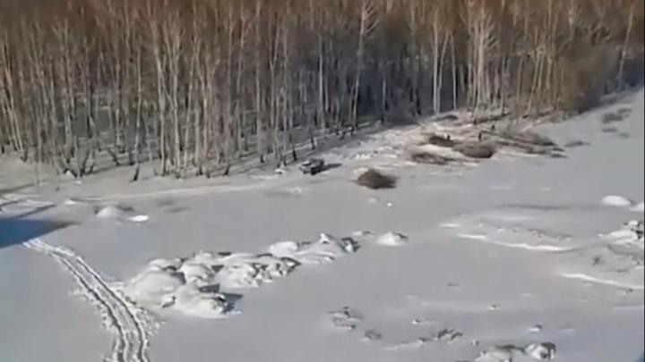 В Челябинске утвердили проект застройки «Паркового», где «без разрешения» мэрии сносят деревья