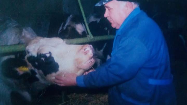 «Корове может не нравиться соседка». Тюменский ветеринар — о том, как 30 лет лечил рогатых