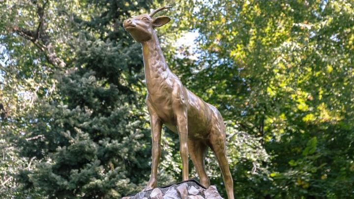 В Самаре откроют музей козы