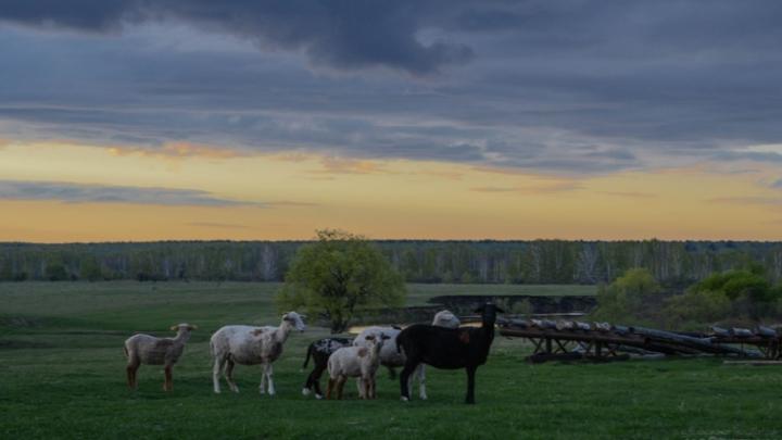 Дотянуться рукой до неба: 15 снимков молодого фотографа из Муромцево
