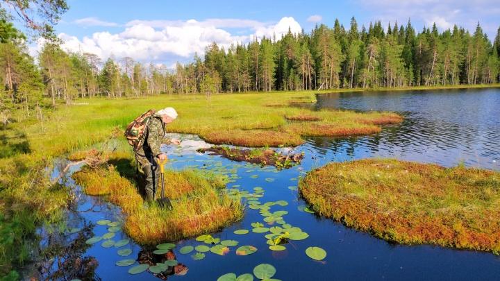 Лакомый кусок для вырубок и месторождений? Как выглядят леса Архангельской области, которые могут исчезнуть