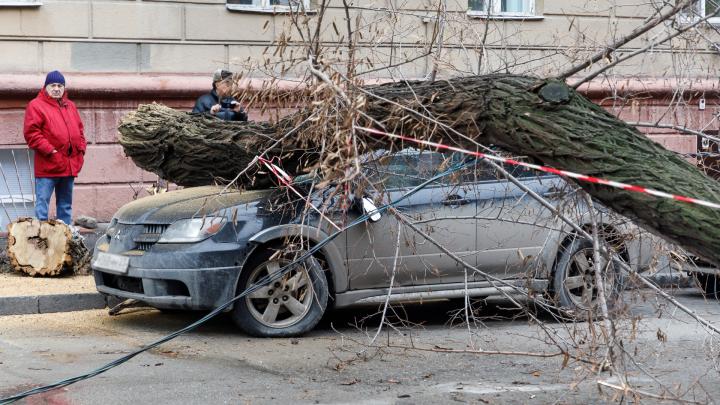В Волгограде разгул стихии: падают деревья, тонут маршрутки, провалы поглощают машины