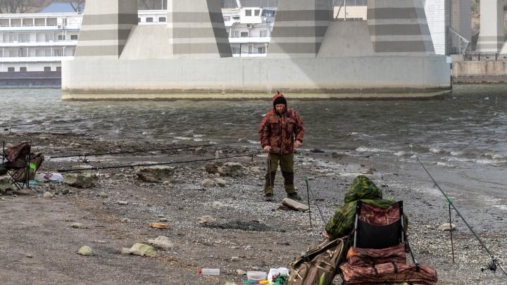 Море — по колено, а Дон — по пояс: 15 грустных снимков обмелевшей реки