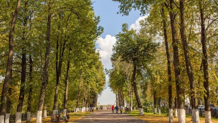 Подарок на один день: какой будет погода в День города в Ярославле