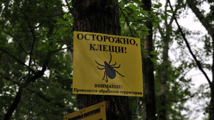 Клещи в уральских лесах немного снизили активность