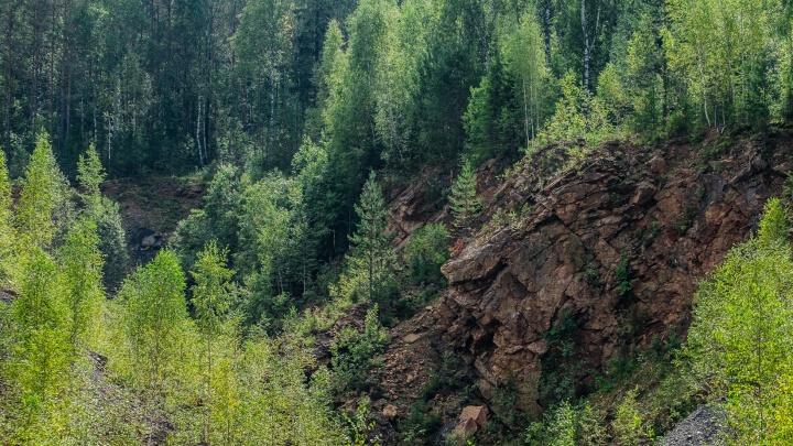 В девяти округах Прикамья ограничили посещение лесов из-за опасности пожаров