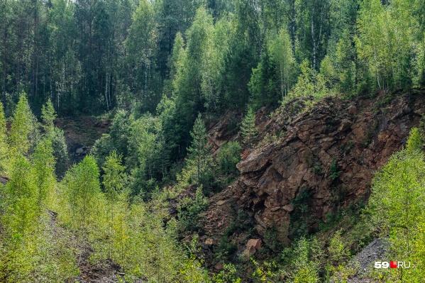 Леса оберегают от пожаров, поэтому их посещение ограничили
