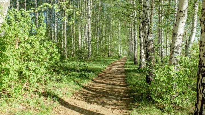 Ярославцам запретили в ближайшие недели ходить в лес: в чём причина