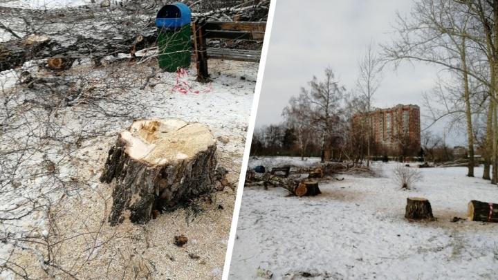 В Парке Юннатов в Студгородке вырубили полсотни деревьев