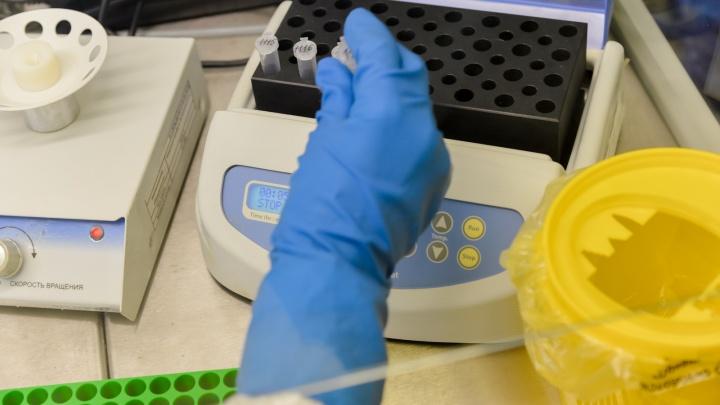 Еще у 272 человек в Архангельской области нашли коронавирус. Данные оперштаба региона