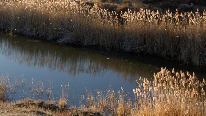 Избили и бросили в воду: в пруду на юге Волгограда обнаружили тело сотрудницы налоговой инспекции