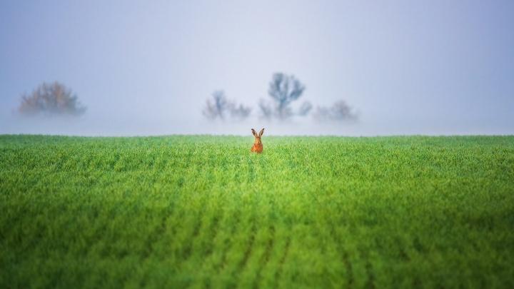 Фотография «Ну, погоди!», снятая екатеринбуржцем, победила в престижном международном конкурсе