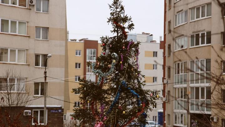 Уфимцы смогут сдать новогодние елки на переработку