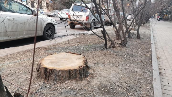 Администрация Ростова одобрила вырубку более 150 деревьев на Пушкинской. Улица «облысела»