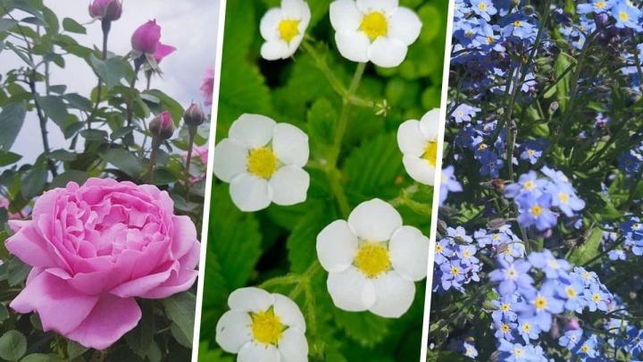 Райские кущи Урала: садоводы показали 56 кадров, с которых можно печатать открытки