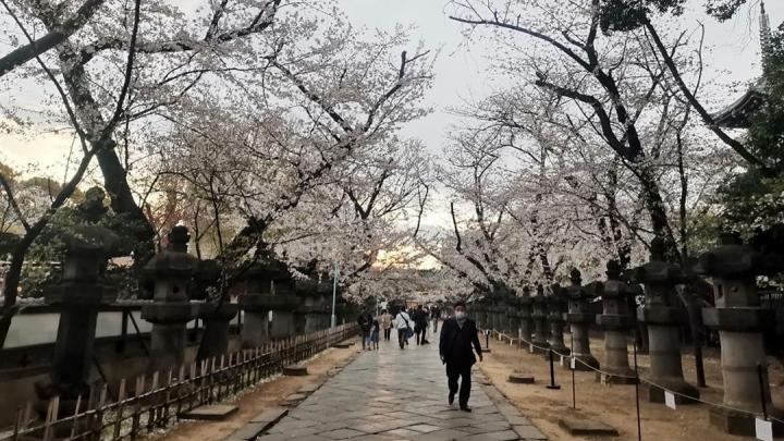 Переехавшая в Токио челябинка рассказала, удалось ли нацию трудоголиков загнать на карантин