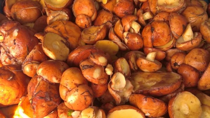 Выносили из леса ваннами: самарские грибники похвастались трофеями в социальных сетях