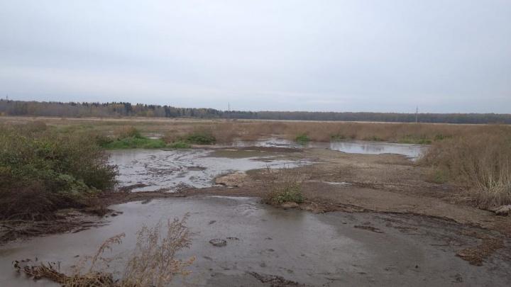 Власти проверили сообщение об экологической катастрофе в Ярославском районе: итоги