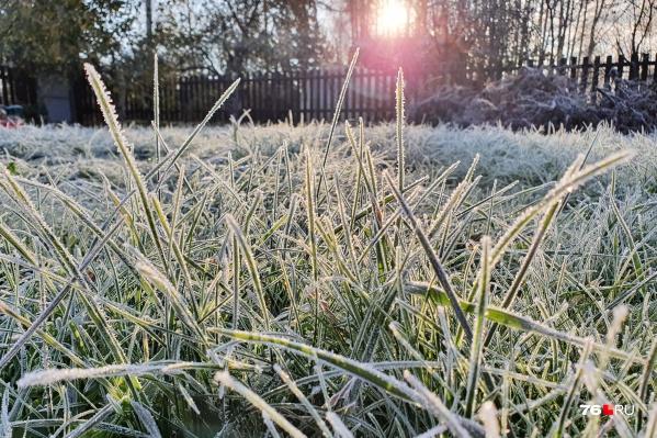 Сегодня ночью и утром были заморозки
