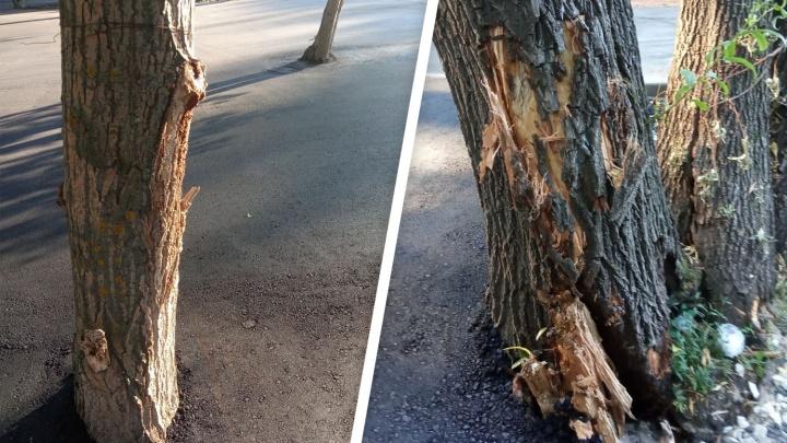 В Самаре в парке Гагарина деревья закатали в асфальт