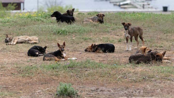 На пустыре в Волгограде бездомные собаки растерзали тело умершей женщины
