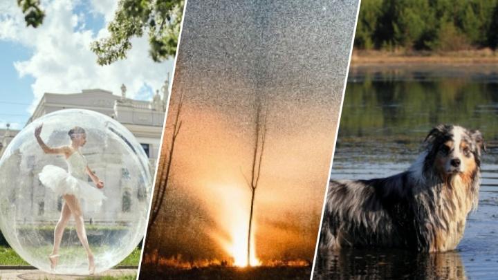 Подборка невероятных пейзажей и собаки на самоизоляции: выбираем лучшее фото мая
