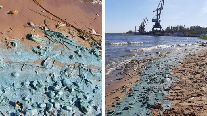 Берега Волги в Ярославле окрасились в странный цвет: специалисты рассказали, что случилось