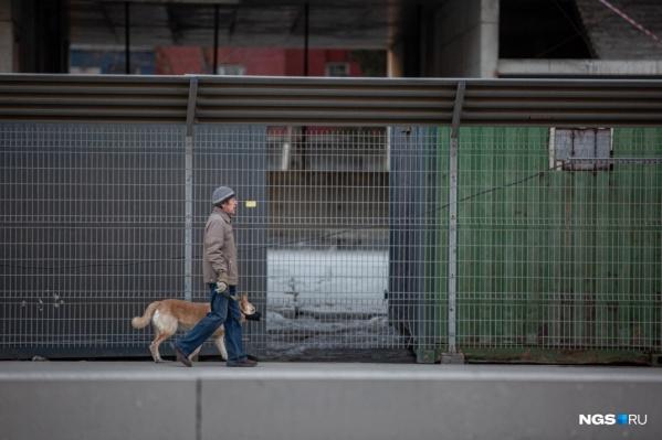 Губернатор разрешил выгуливать собак только в пределах 100 метров от дома. А тем, кто должен сидеть дома по медицинским показаниям, и вовсе нельзя выходить на улицу (даже с домашними питомцами)
